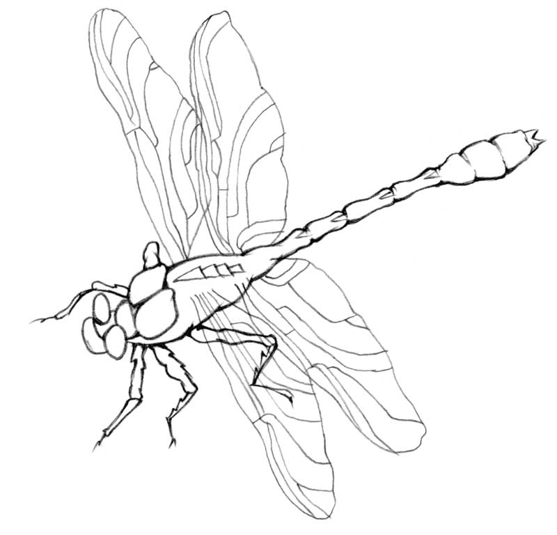 Line Drawing Dragonfly : Drawing lesson dragonfly the scribbles institute