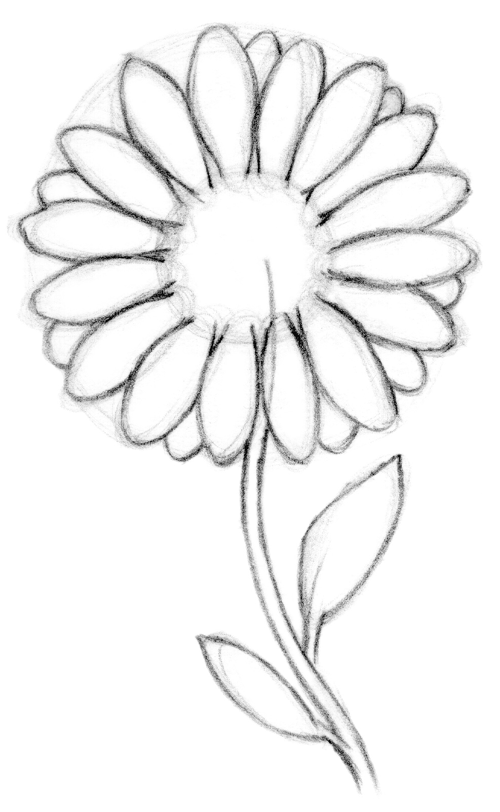 Daisy Flower Line Drawing : Daisy line drawing imgkid the image kid has it