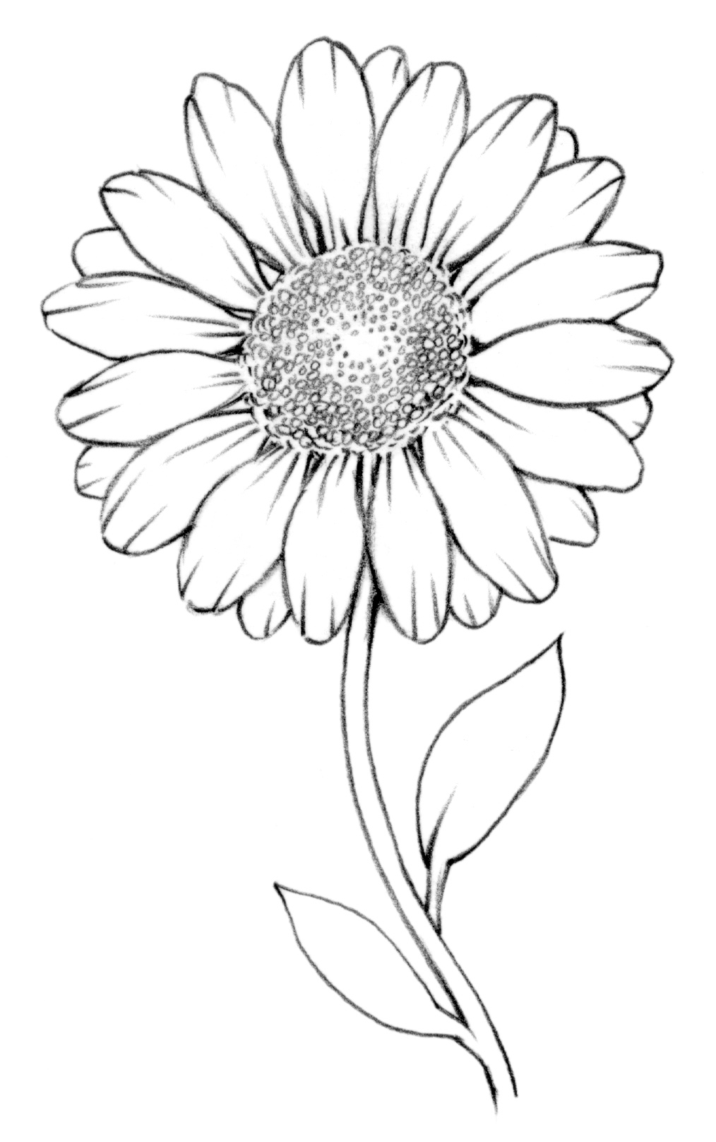 Drawing Lesson: Flower | The Scribbles Institute