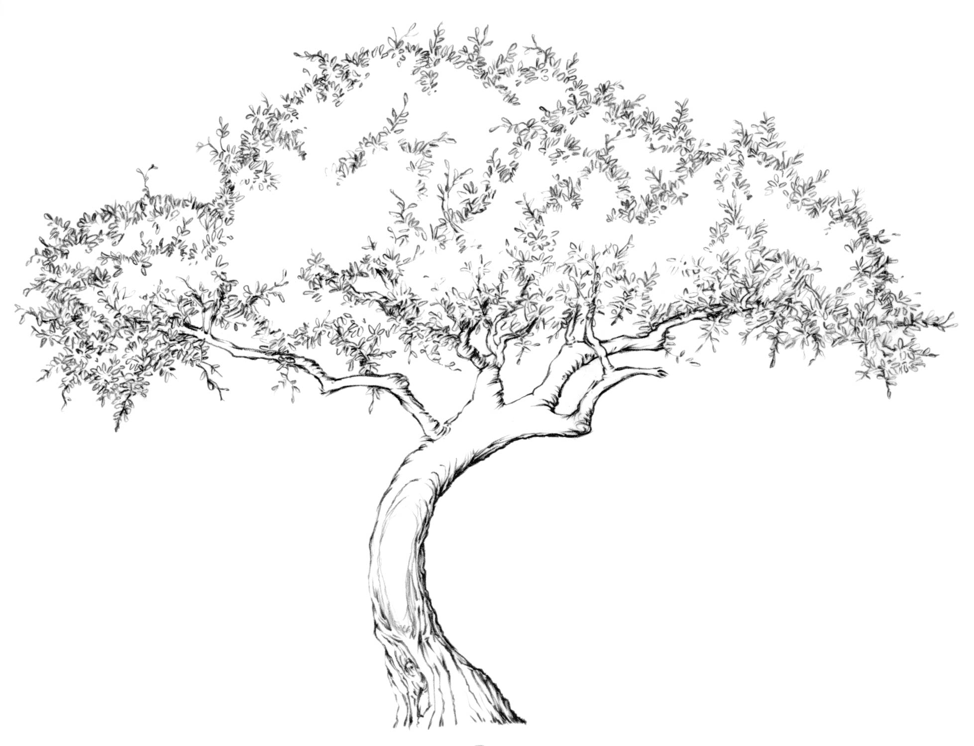 Drawing Lesson: Tree | The Scribbles Institute