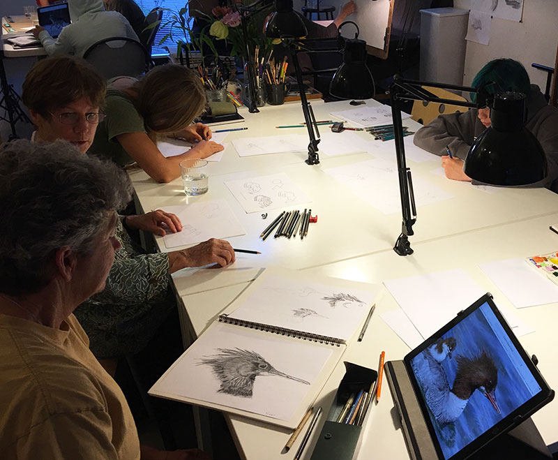 Whether you are an experienced sketcher or beginner, sharing your drawings with others can be a valuable learning experience. Level 3 sketcher, Storey, shares her intensive study of a duck with Tina, Level 1.
