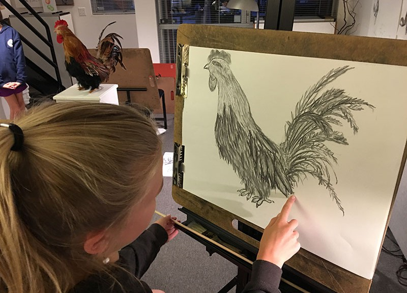 8-21-17-laurel-rooster-charcoal-drawing