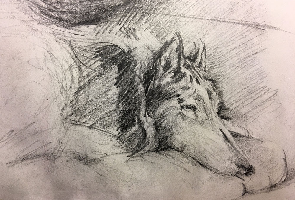 dog-blue-sketch
