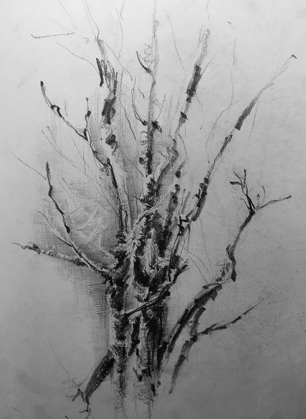 tree-san-clemente