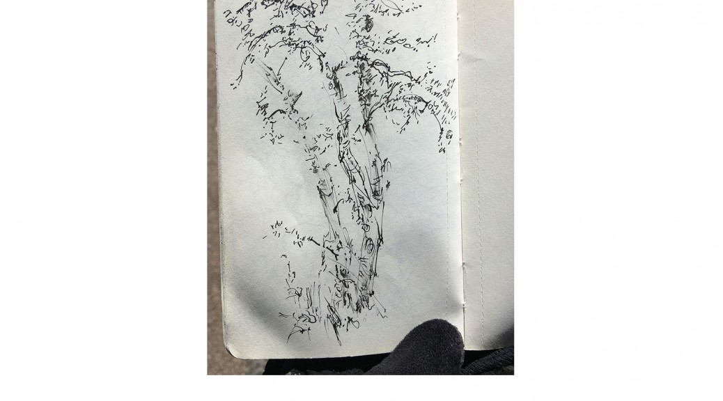 10-1-17-rob-tree-sketchbook-bike13